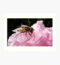 Dropping in for a bite! Hoverfly on Rhododendron New Zealand Art Print