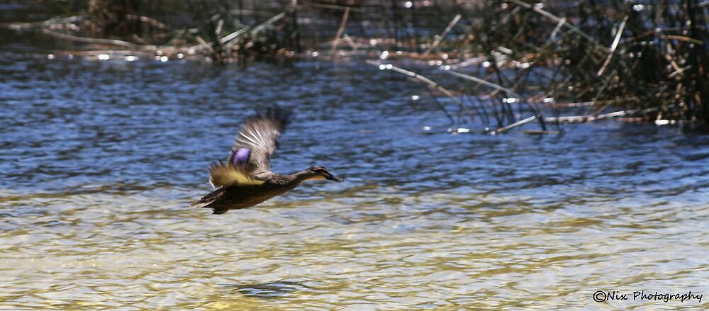 Flying Duck by Nix76