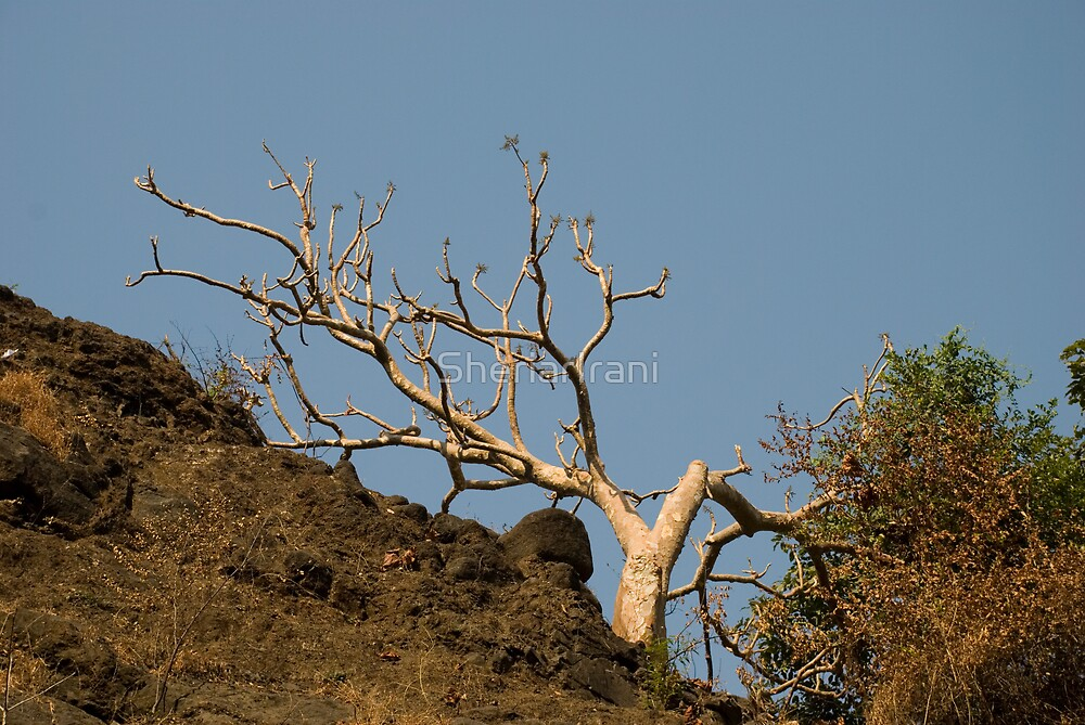 Bare white tree, bathed in morning sunlight by SheriarIrani