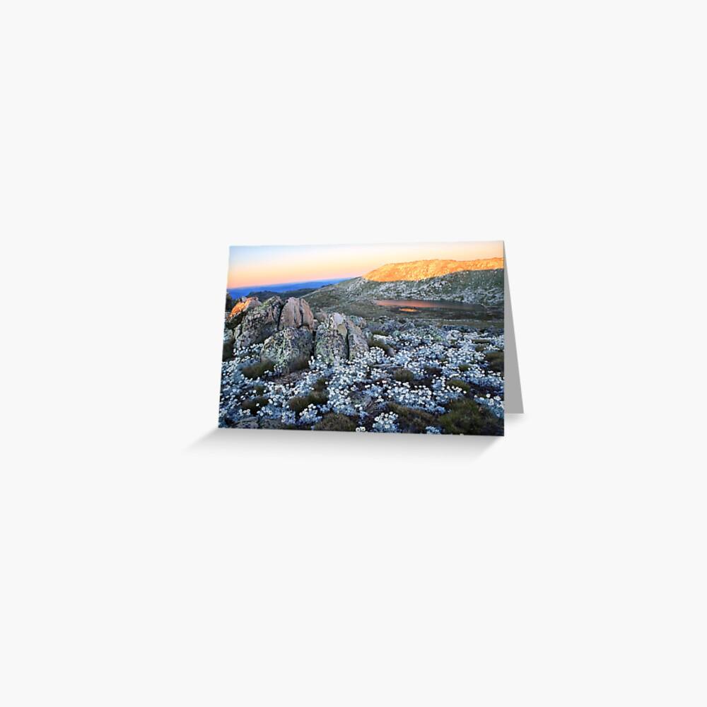 Mt Kosciusko Silver Snow Daises Greeting Card