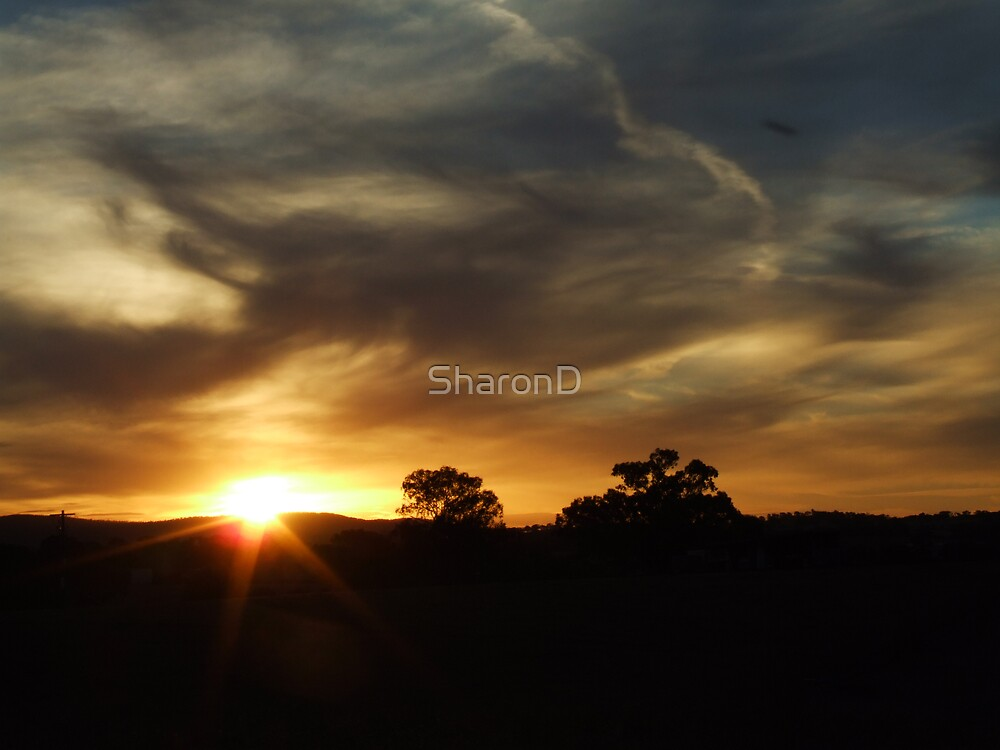 Evening light by SharonD