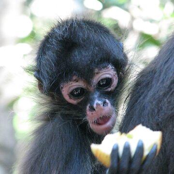 Baby Monkey by shawnzahavi