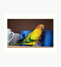 Coffee or Tea? - Sunshine - Sun Conure - NZ Art Print