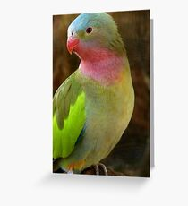 Do you like my Pastel Outfit! - Princess Parrot - NZ - Southland Greeting Card