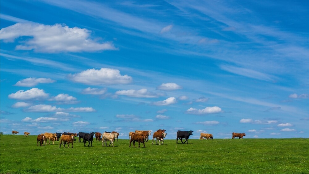 Prairie Sky With Cows by Fisto64