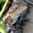 Jacky Lizard - Australia by Mette  Spange
