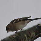Wintery Bird by ShirtsandShorts