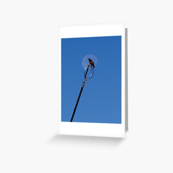 Moon Hawk Greeting Card