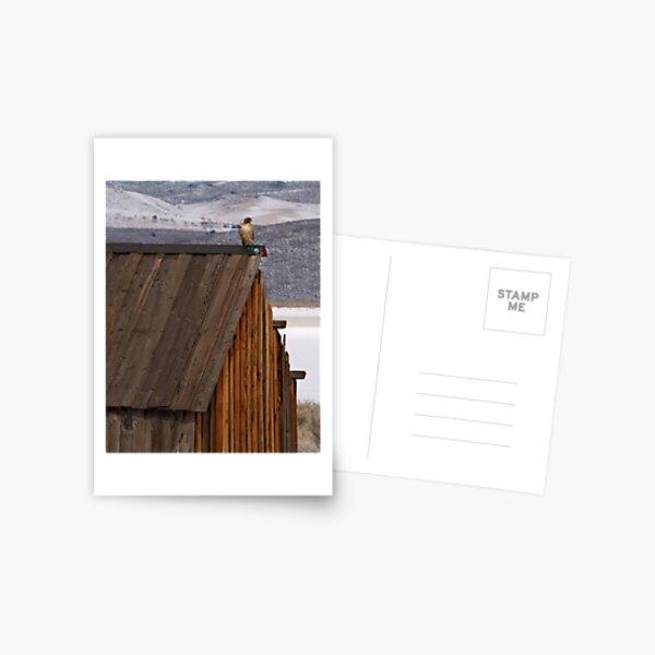 Rooftop Raptor Postcard