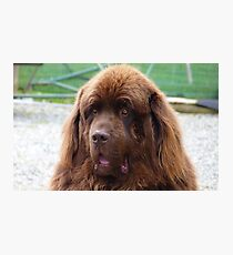 I know you can't help but love me! - Big Dog - NZ Photographic Print