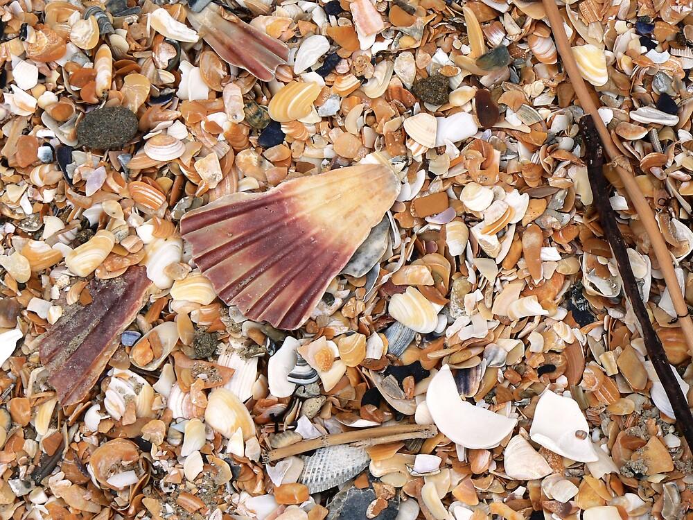 shells by Brett Harris
