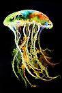 Neon Jellyfish by Linda Callaghan