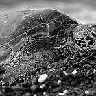 Profile Hawaiian Sea Turtle BW by Amber D Hathaway Photography