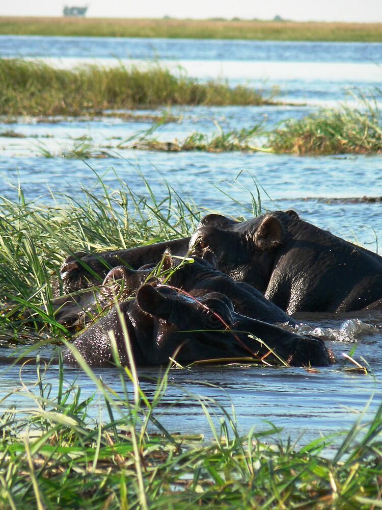 three hippos by Brett Harris