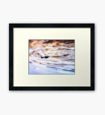 Platypus at Sunset Framed Print