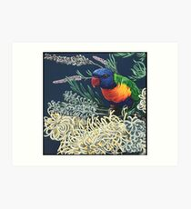 Rainbow Lorikeet and Grevillea Art Print