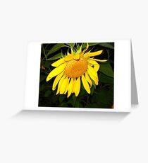 Sunflower Sans Soleil  Greeting Card