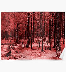 Red Enchanted Forest, nature theme Poster