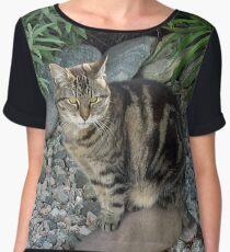 Sitting Pretty - Tabby Cat in a Rockery Chiffon Top