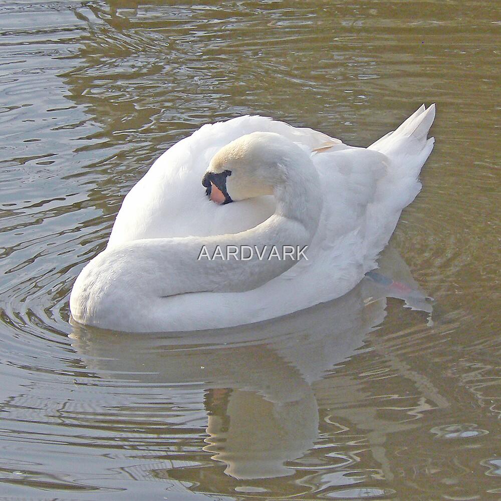 Preen Preen - A Mute Swan by AARDVARK