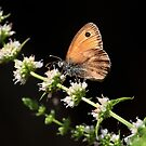 Orange Butterfly no. 2 by artddicted