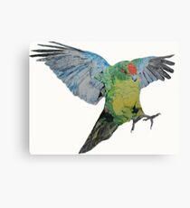 Red Crowned Parakeet Canvas Print