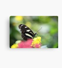 Butterfly with Curled Tongue Canvas Print