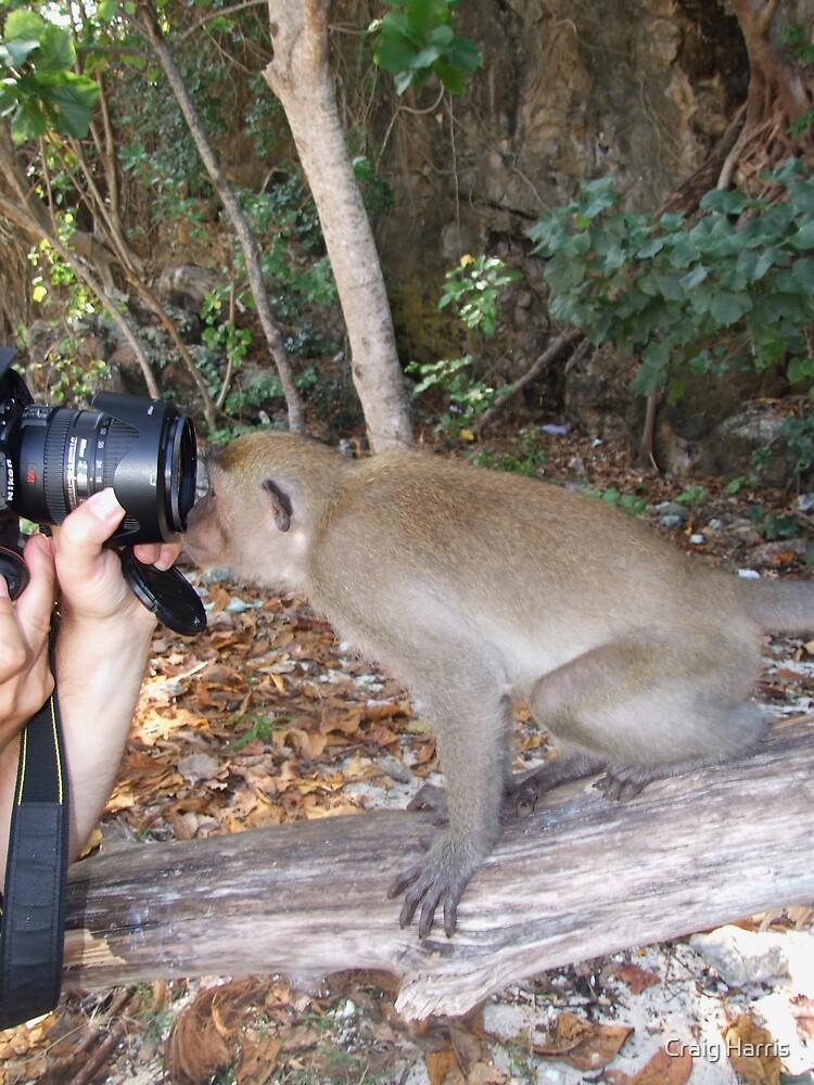 Monkey See by Craig Harris