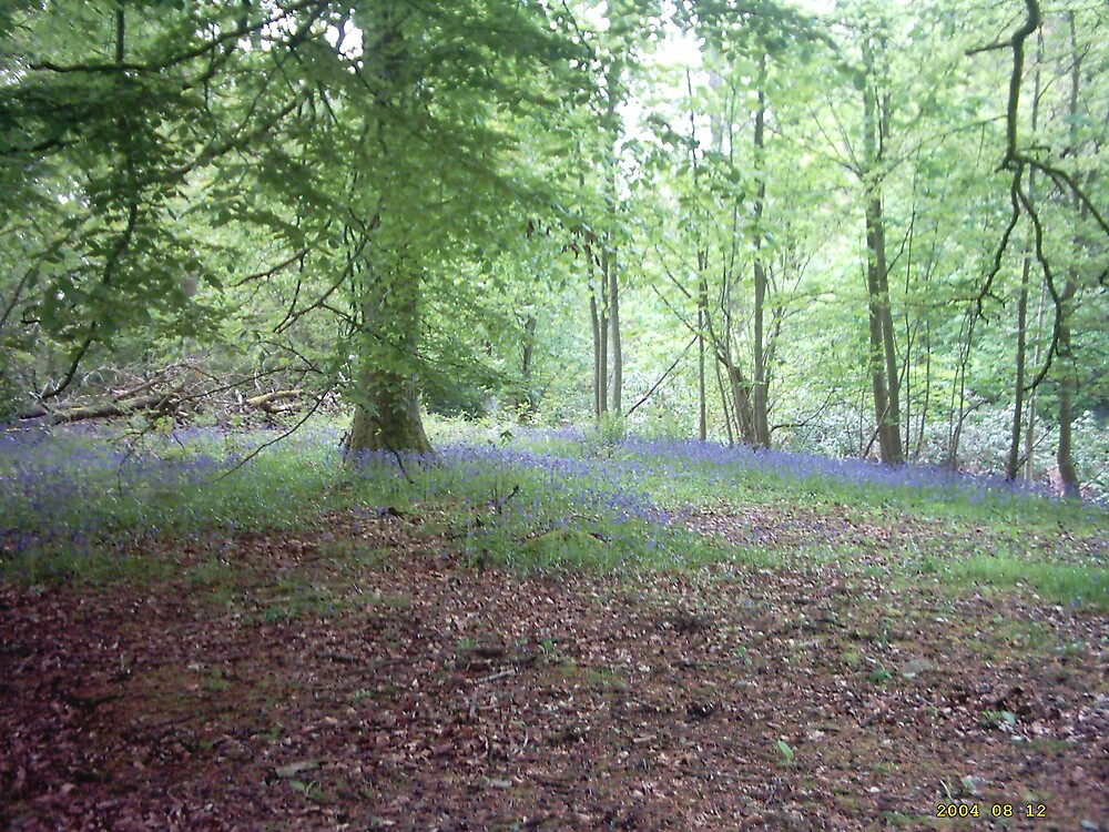 Bluebell wood. Goldielea by crabbitcow