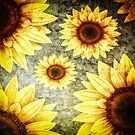 Sunflowers 2 by Gypsykiss