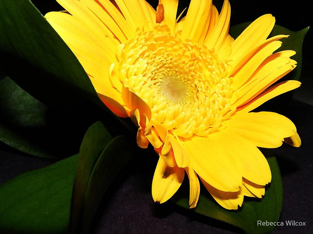 Ray of Sunshine by Rebecca Brann