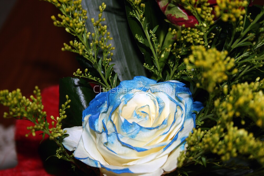The bluish-white rose by Christian  Zammit