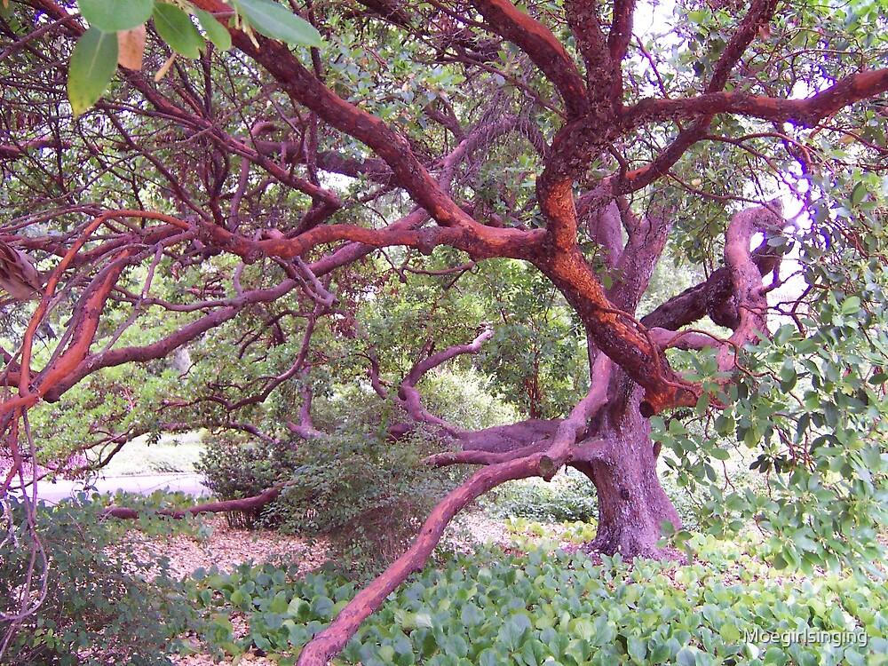 Tree in Oz by Moegirlsinging