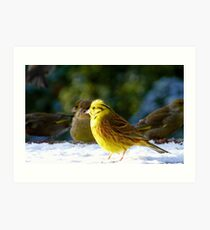 Glad the sun came out! - Yellow Hammer - NZ - Southland Art Print