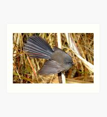 Natures beautiful Fan! - Fantail - NZ - Southland Art Print