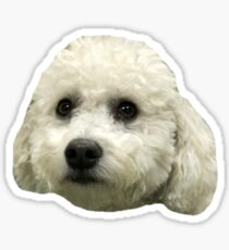 bichon frise puppy Sticker