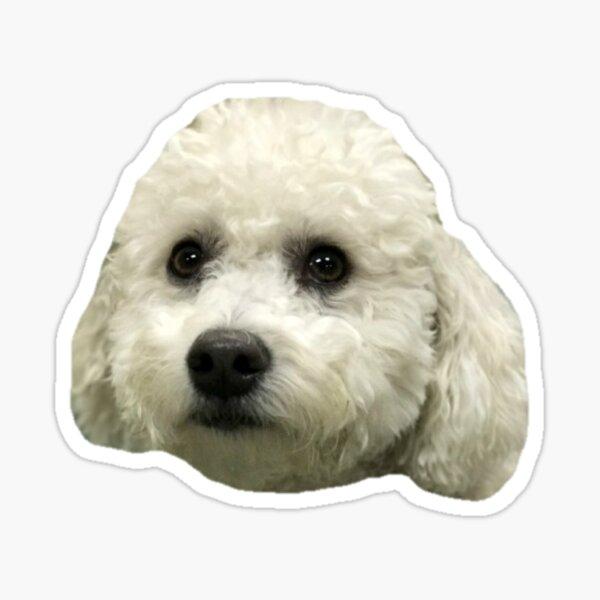 bichon frise puppy Sticker