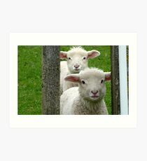 Do we look like Twins! - Lamb - NZ - Southland Art Print