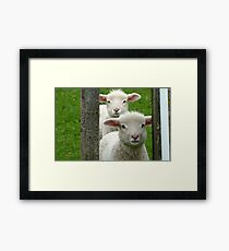 Do we look like Twins! - Lamb - NZ - Southland Framed Print