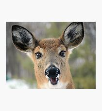 Faces of Deer Series #1 Photographic Print