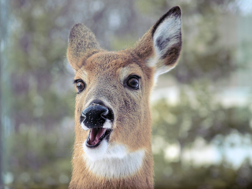 Faces of Deer Series #3 by JThill