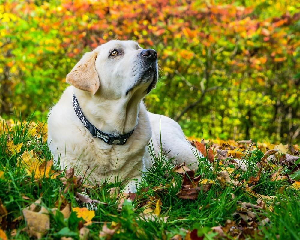 Fall Dog by Fisto64