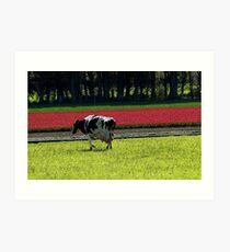 Grazing with Beauty! - Dairy Cow - NZ - Southland Art Print