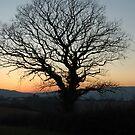 Treeset by Benjanizzle