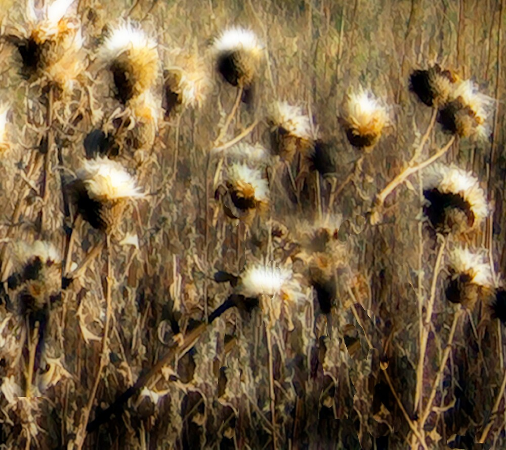 Thistles in the Field by Jing3011