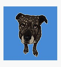 CHARLIE / cute mutt dog pet portrait puppy eyes brindle bull breed pit bull dog art  Photographic Print