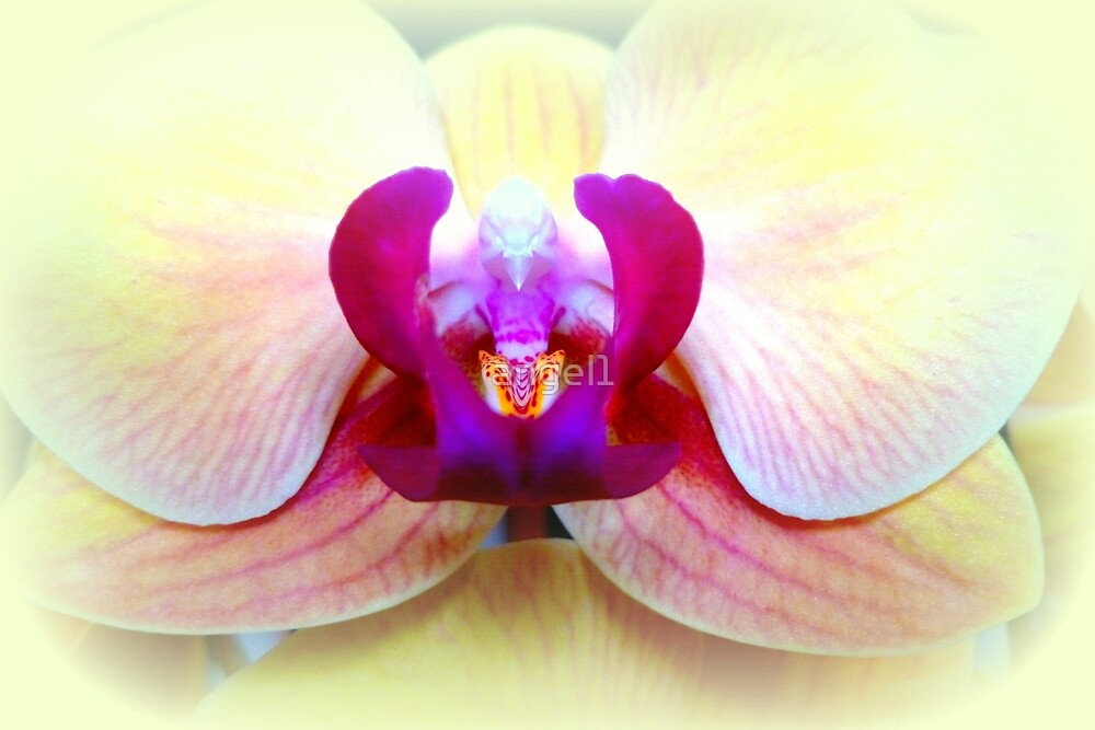 Phalenopsis by ©The Creative  Minds