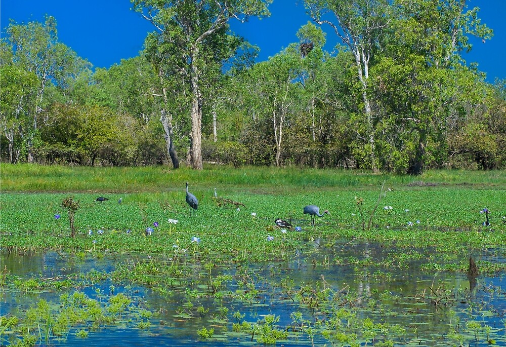Yellow Water Billabong - Cooinda - Kakadu National Park by David Blackwell