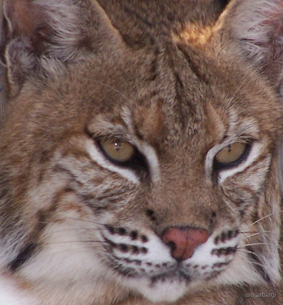Bobcat by wayatsagi