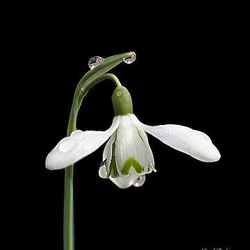 Diamond Flower by Meach